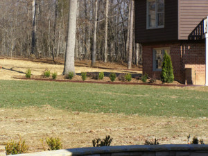 Tree, Shrubs, Landscaping, Charlotte, NC