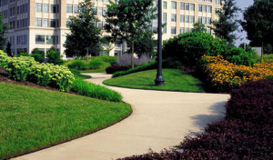 Commercial Landscaping, Charlotte, NC